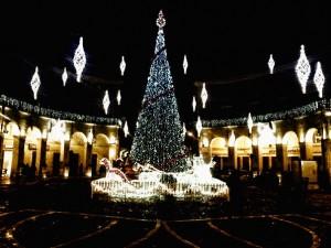 Si accende il Natale a Caserta: L'albero di Natale